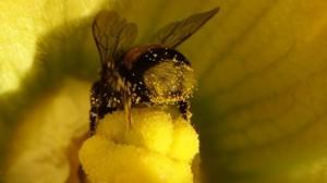 bijen2