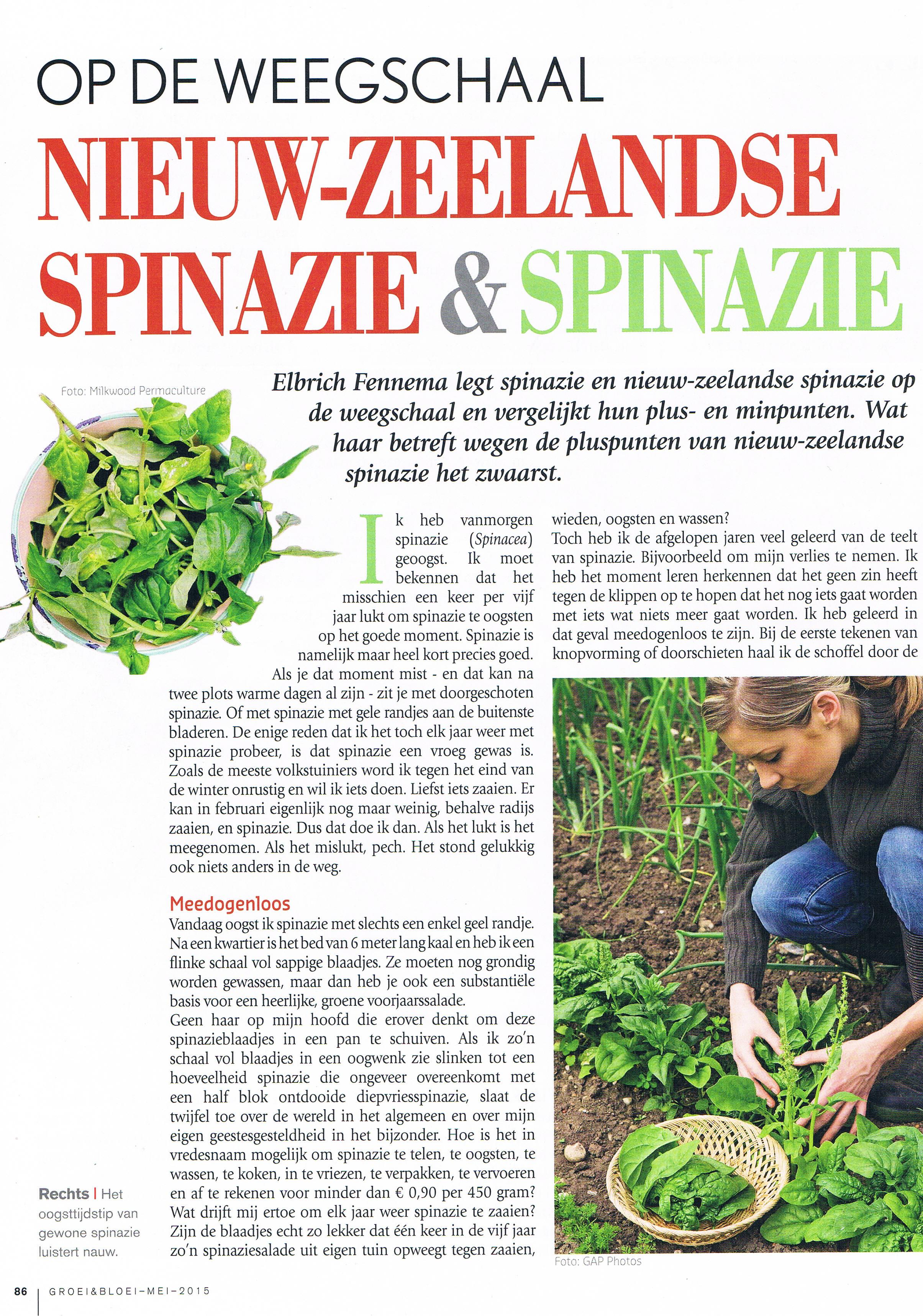 spinazie1